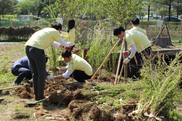FORCS employees doing tree planting